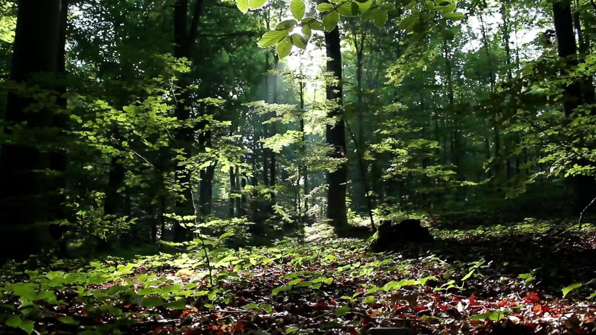 video_forest.jpg